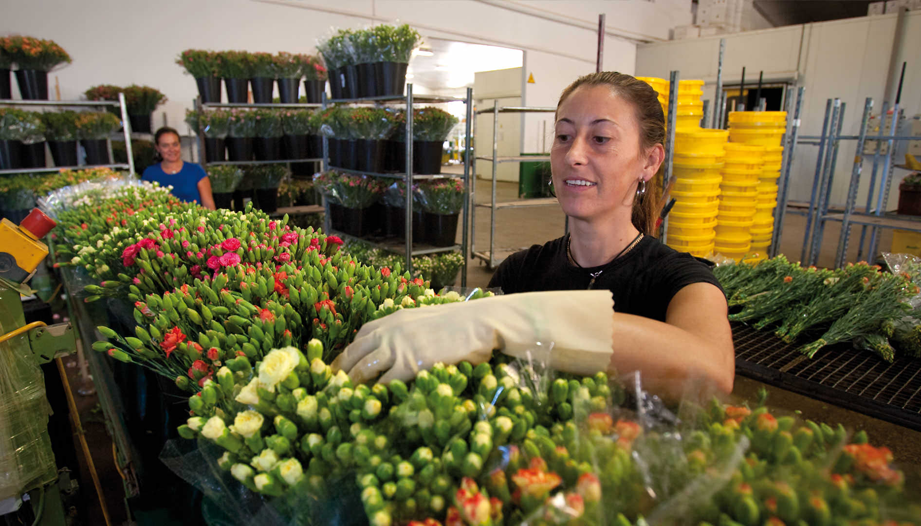 Workers in the cut flower industry, Chipiona.