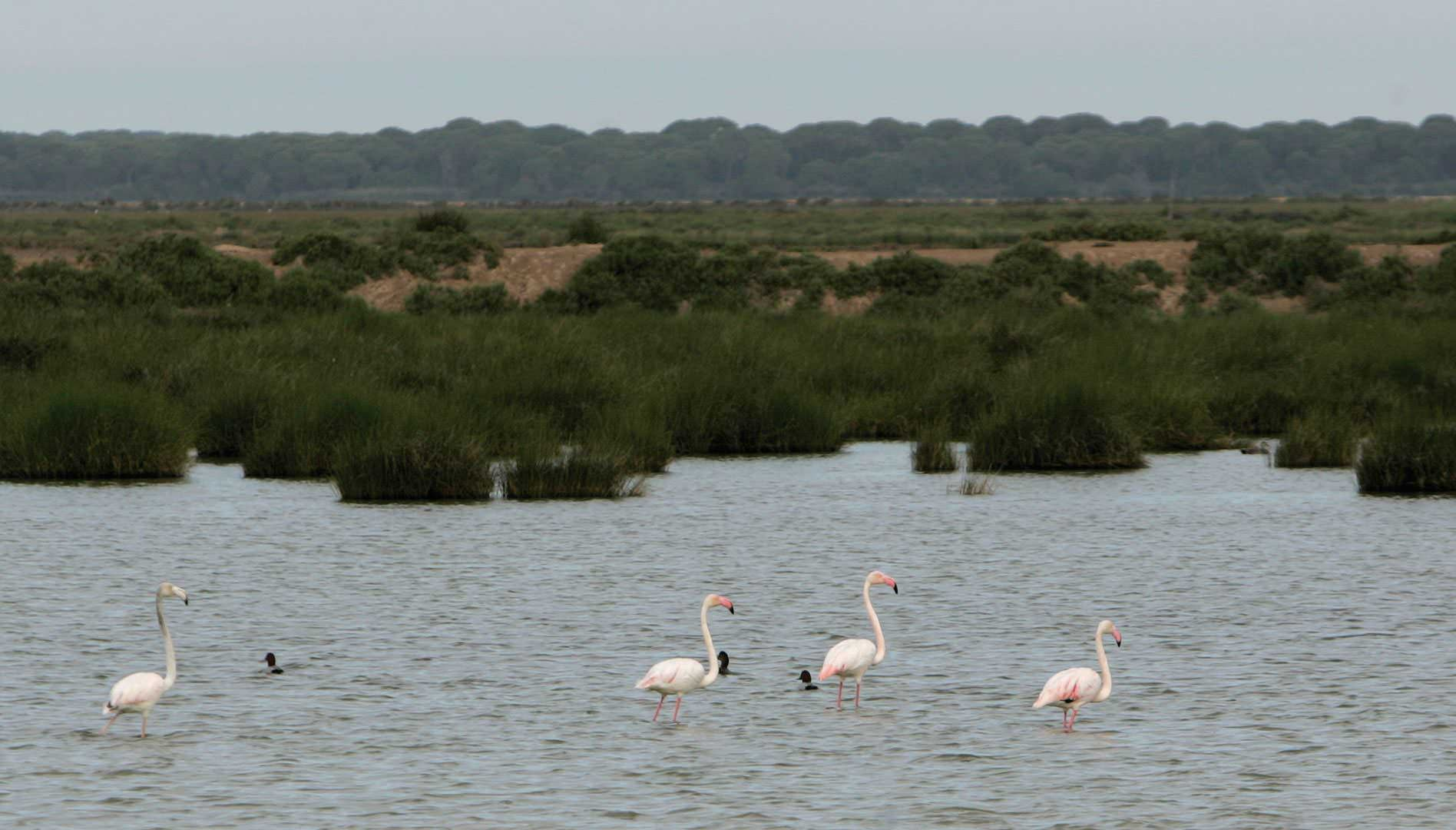 The marshes of Doñana National Park, in Sanlúcar de Barrameda.